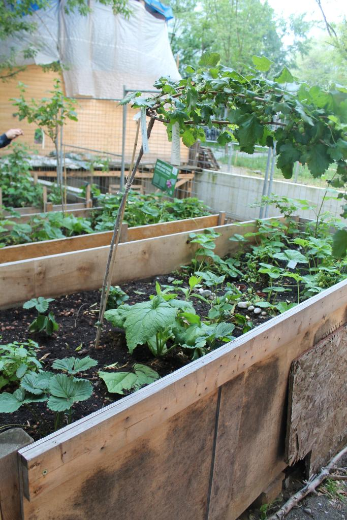 Spreefeld has its very own community garden where residents work weekly. Photo Brian Vaughn