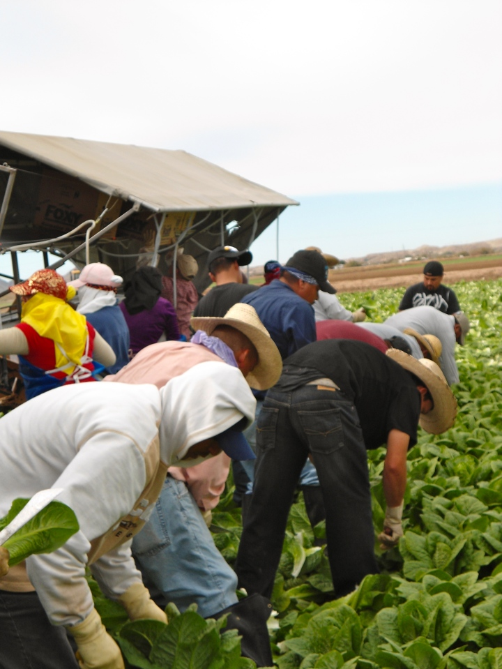 Farm workers in a tobacco field (Courtesy of National Farm Worker Ministry)