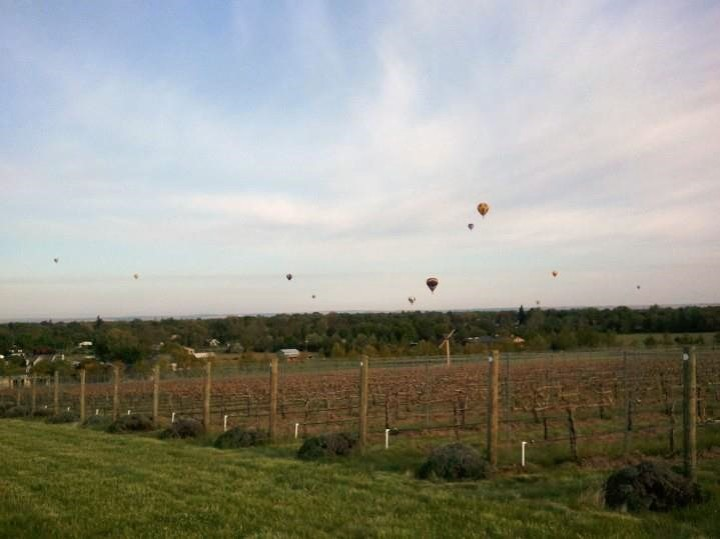 Walla Walla Vineyard and Hot Air Balloons (3)